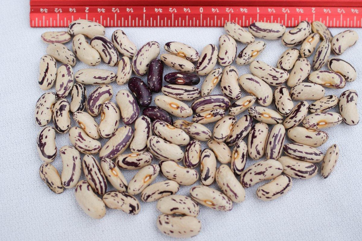 Thibodeau Comte Beauce - Harvest with Scale-01407.jpg