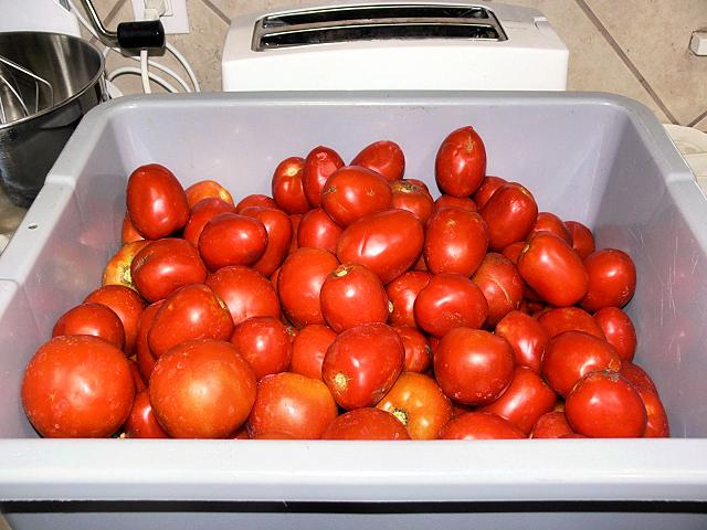 Tomato_Harvest_061017.jpg