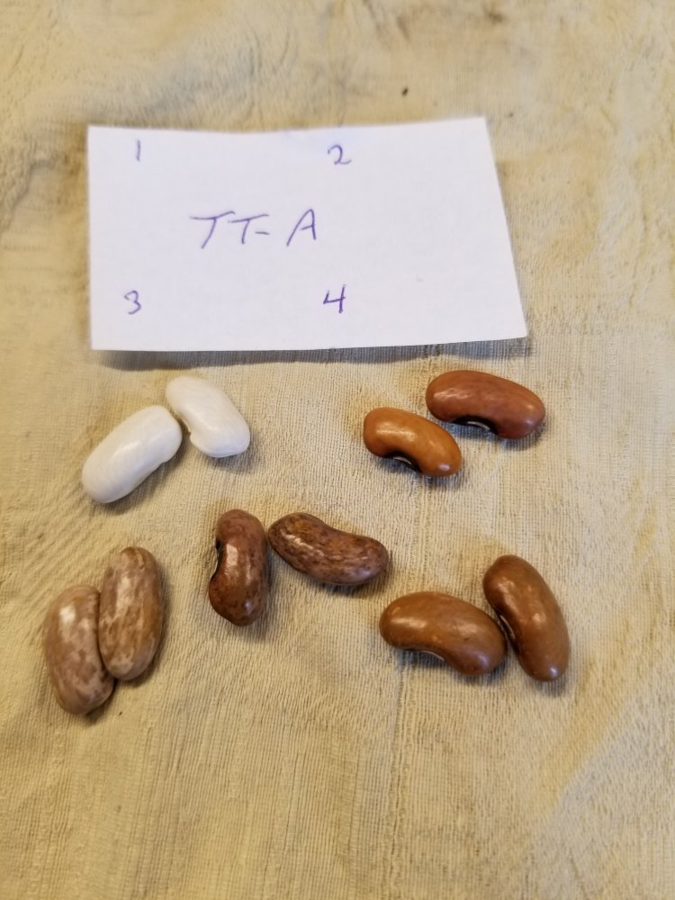 TT A Beans.jpg