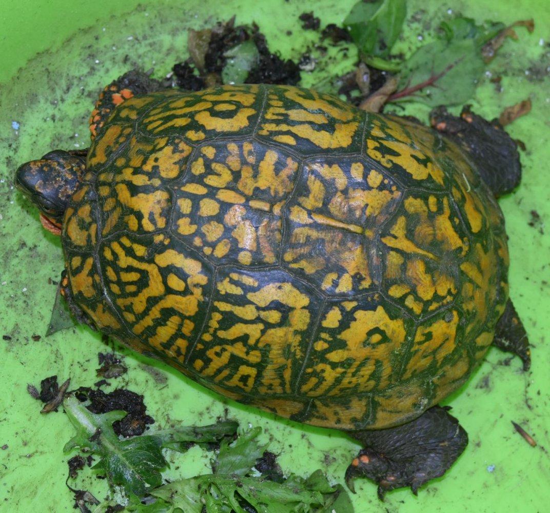 turtle teg.jpg