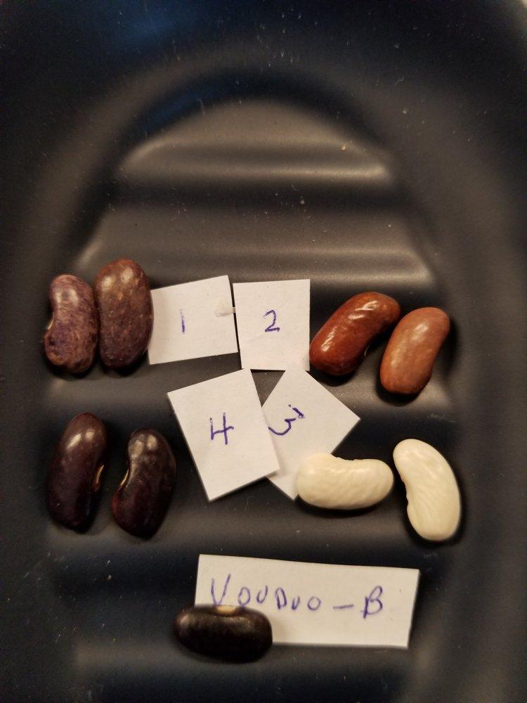 Voodoo Black Beans.jpg