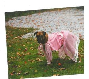 Sadie the Fairy Princess.jpg