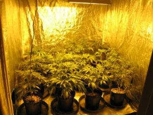 indoor-grow-room.jpg