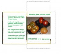 brownish Red tomato seeds.jpg