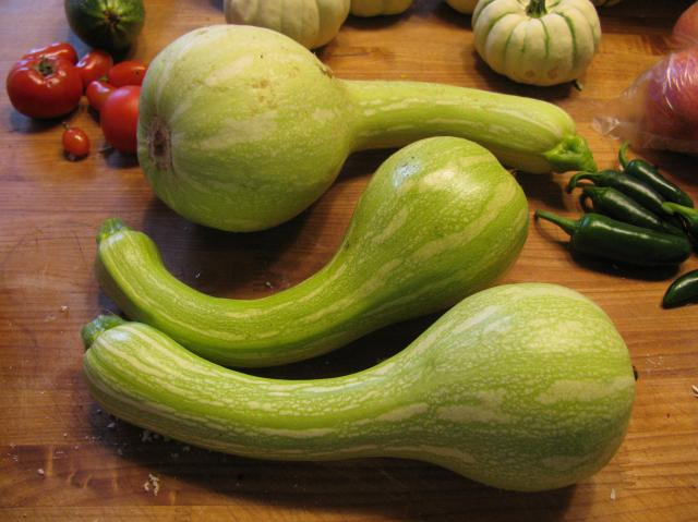 Healthy slug eggs? | TheEasyGarden - Easy, Fun, & Fulfilling Gardening