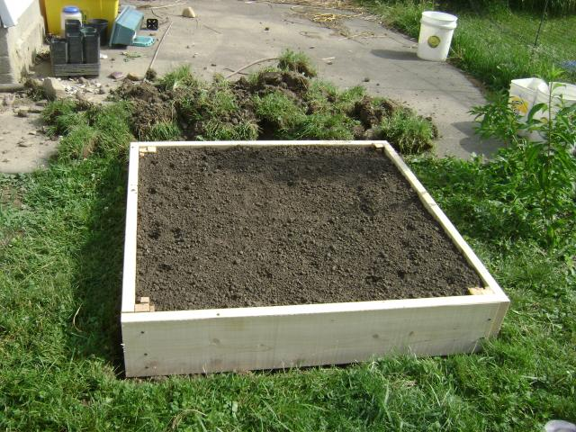 Perfect Ok I Built My Garden Box Yesterday.Filled It With Rabbit Poo,soil,and  Worms/worm Poo. I Planted Round Zukes,swiss Chard,daikon  Radish,beets,ground Cherries ...